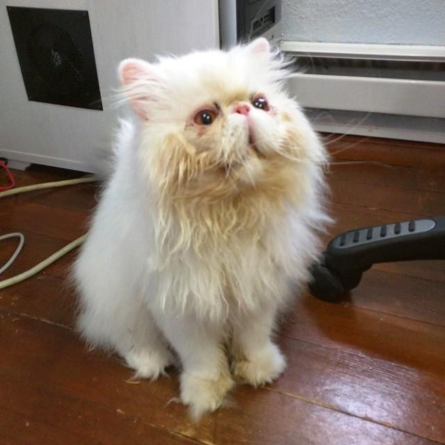 拾われてきたときの猫