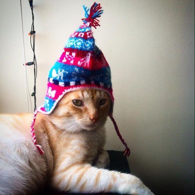 帽子を被った猫