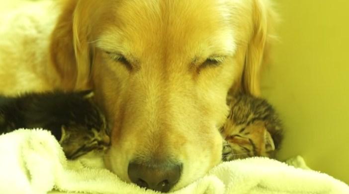 仲良く眠る犬と子猫