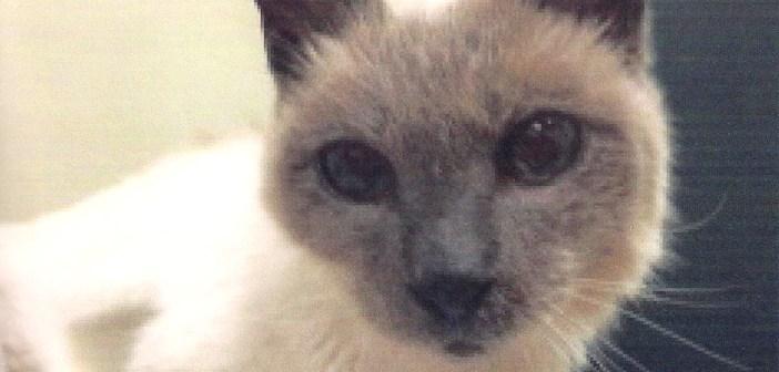 世界最高齢の猫スクーター30歳