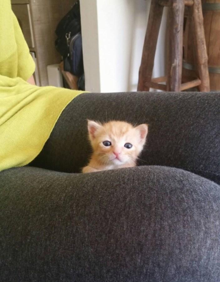 ひょっこり顔を出す子猫