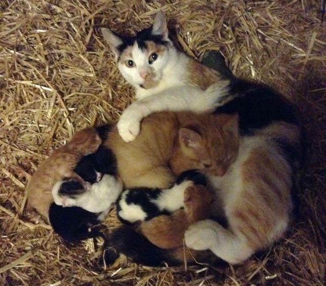 みんなでお昼寝するネコの親子