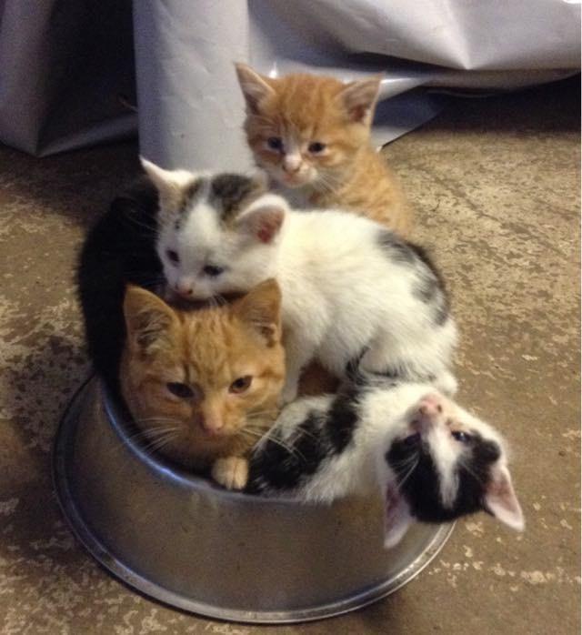 みんな仲良しの猫の兄弟