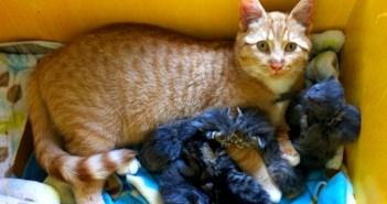 父猫に育てられる子猫