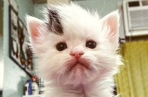 不思議な髪型の子猫