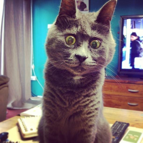 興味のある猫