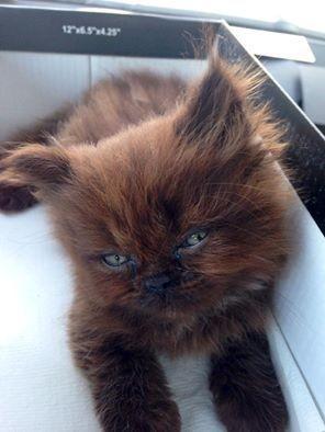 くつろぐ子猫