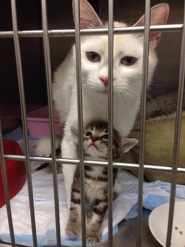 子猫を産んだ母猫
