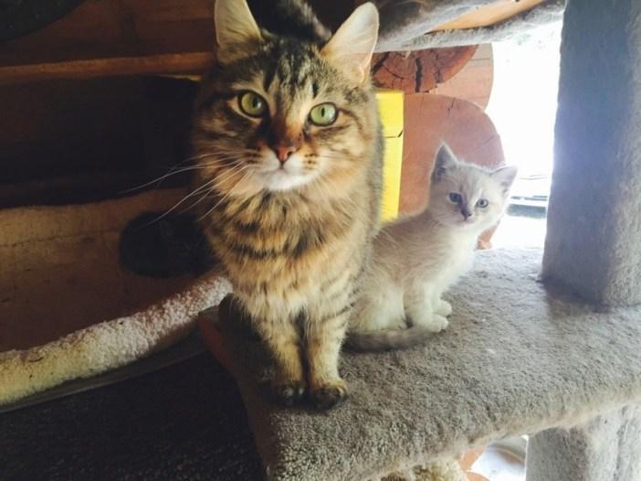 子猫と仲良くなった愛猫