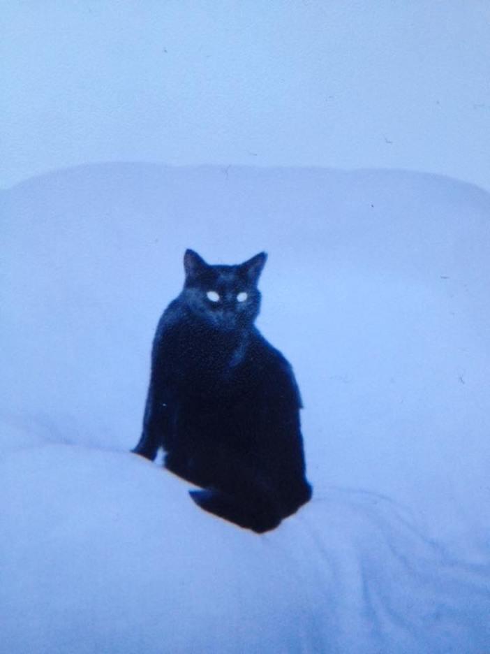 白黒猫の過去