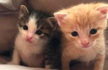 台風の前日に拾った二匹の子猫