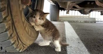 トラックにしがみついてきた子猫
