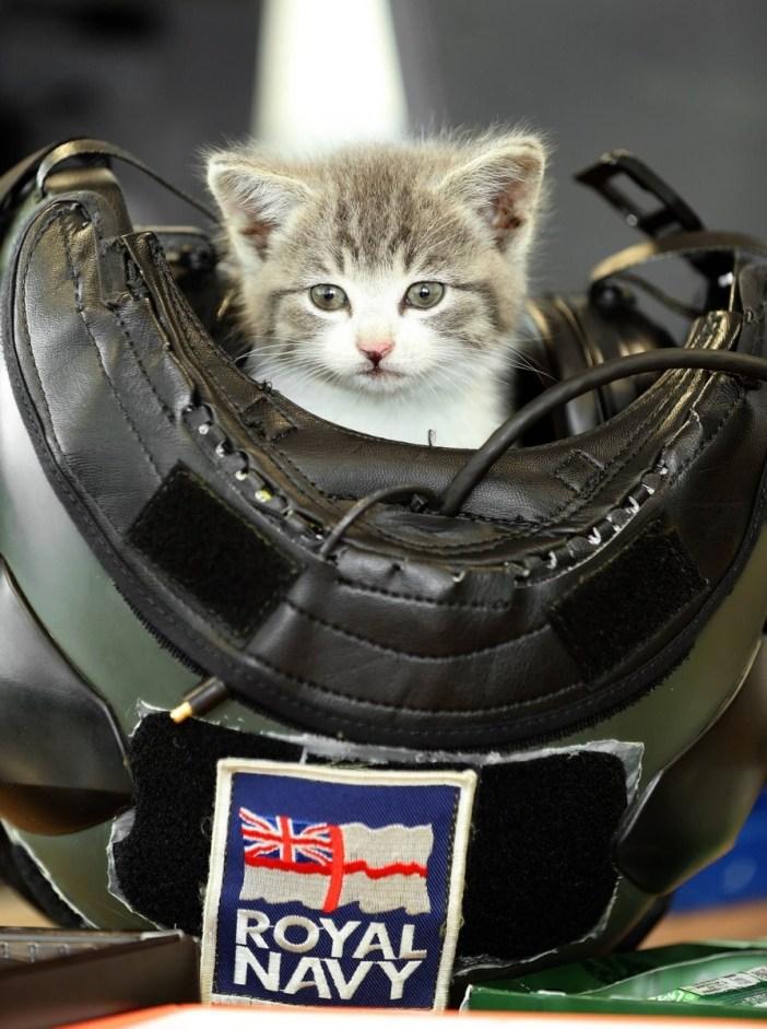 483km車で移動した子猫