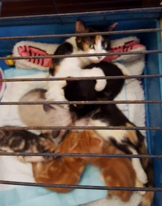 幸せそうな母猫と子猫