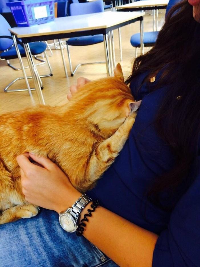 学生に抱っこされる猫