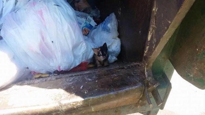 ゴミ収集車と子猫