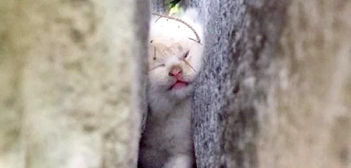 岩の間に挟まった子猫