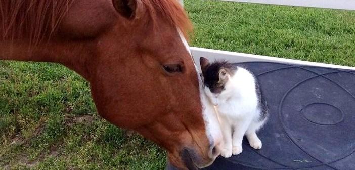 小さな頃から馬のお父さんに育てられた猫。種族を越えた親子の姿に心が癒される (*´ω`*) 5枚