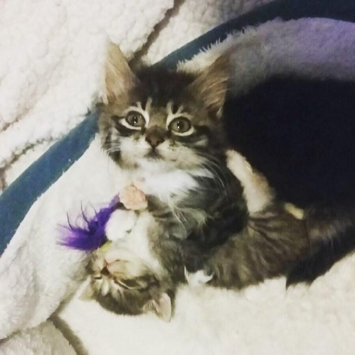 いっしょに遊ぶ子猫