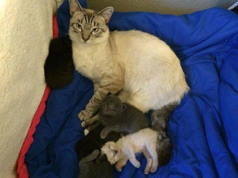 幸せ家族猫