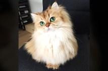 猫のスムージー