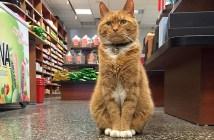 スーパーでお客さんをお迎えする猫