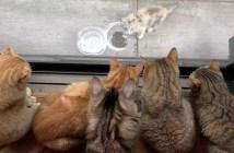 10匹の猫と子猫