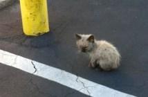 ボロボロだった子猫