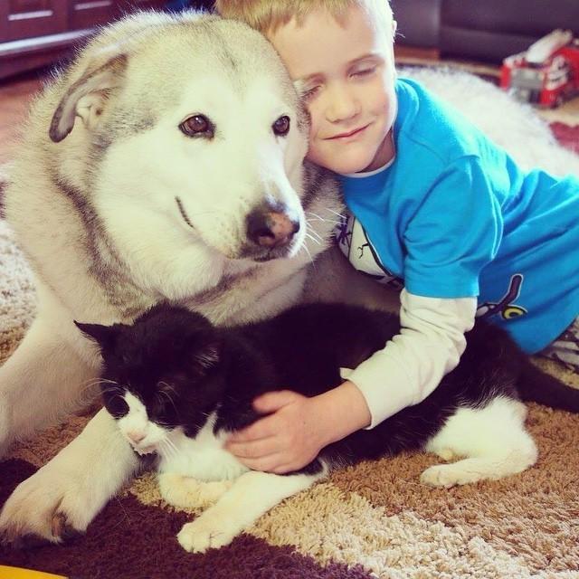 猫と犬を抱く少年