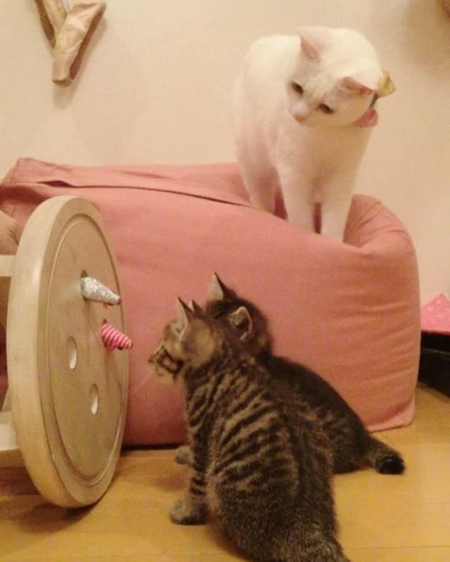 子猫の様子を見守る猫