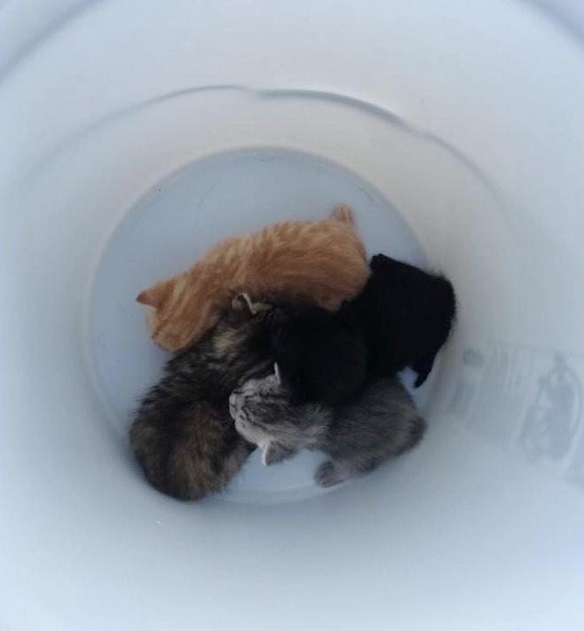バケツの中に子猫