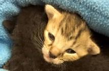 バケツの中の子猫