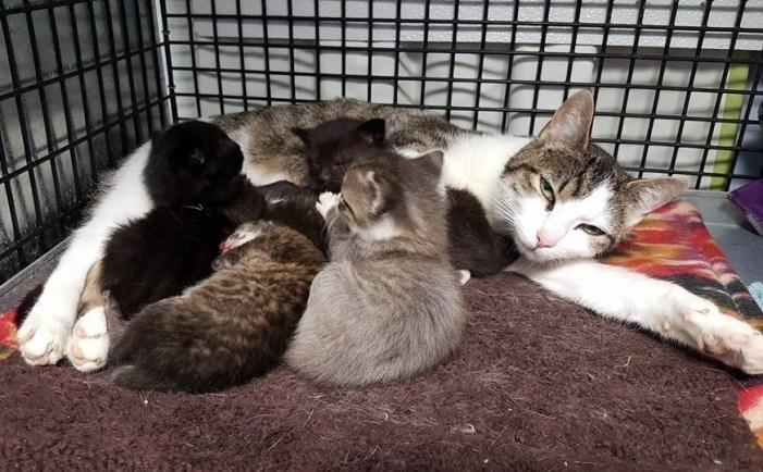 猫と一緒のボブキャットの赤ちゃん