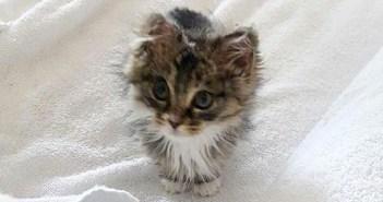 火事の中救われた子猫