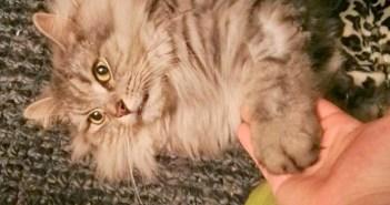 保健所から保護された猫