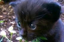 小屋の後ろで見つかった子猫