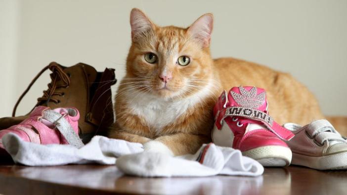 色々なものを持ってくる猫