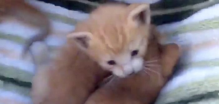 ポケモン子猫