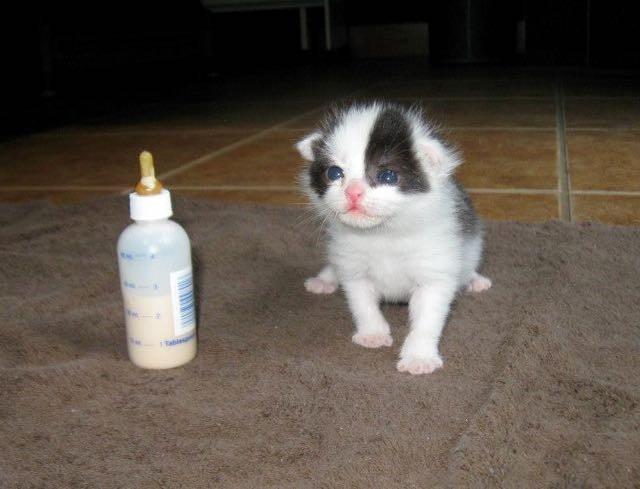 ミルクと猫