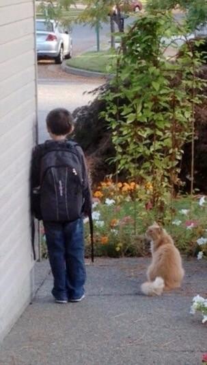 少年と一緒にバスを待つ猫