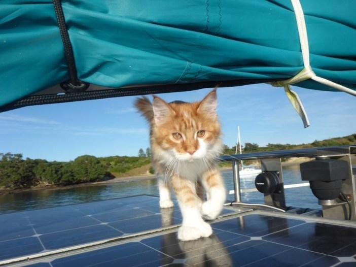 船に乗る猫