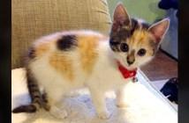心臓病の子猫