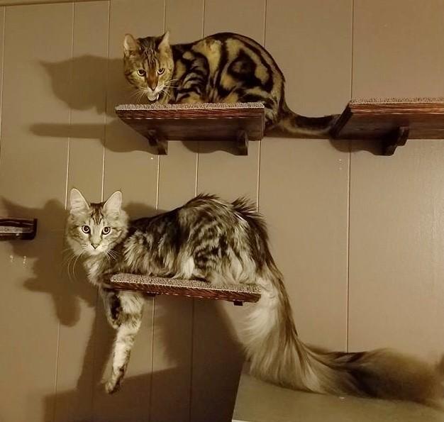 他の猫と比べてみるとシッポが長い