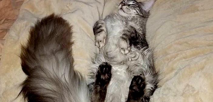 シッポが長い猫