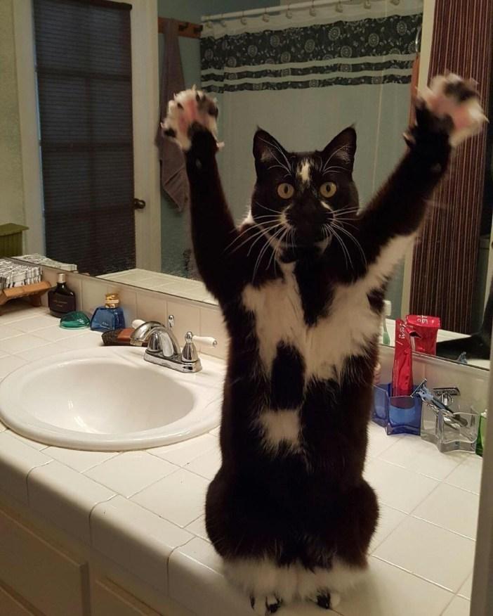 洗面所でバンザイする猫