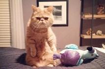 いつも立ってる猫