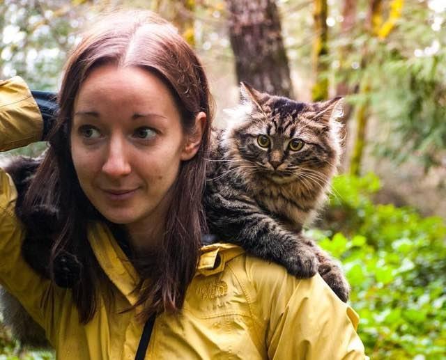 肩でくつろぐ猫