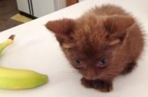 保護された子猫。バナナくらいの大きさ