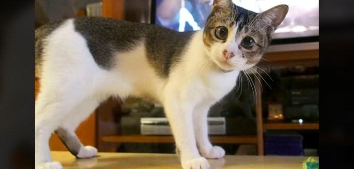 瞳の大きな猫