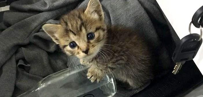 独りぼっちの迷子の子猫。保護先で20人の友達ができると、とても嬉しかったようで… (9枚)